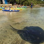 Stingrays and Glass Bottom Kayaks