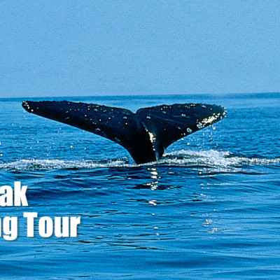 Book a Sea Kayak Whale Watching Tour