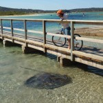 Bike hire and Stingrays !
